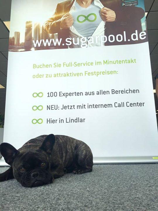 SugarPool Hund vorm Plakat