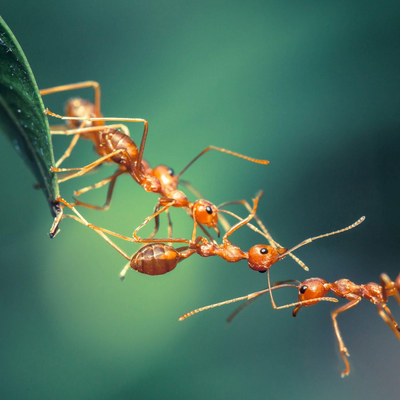 Ameisen Team 2